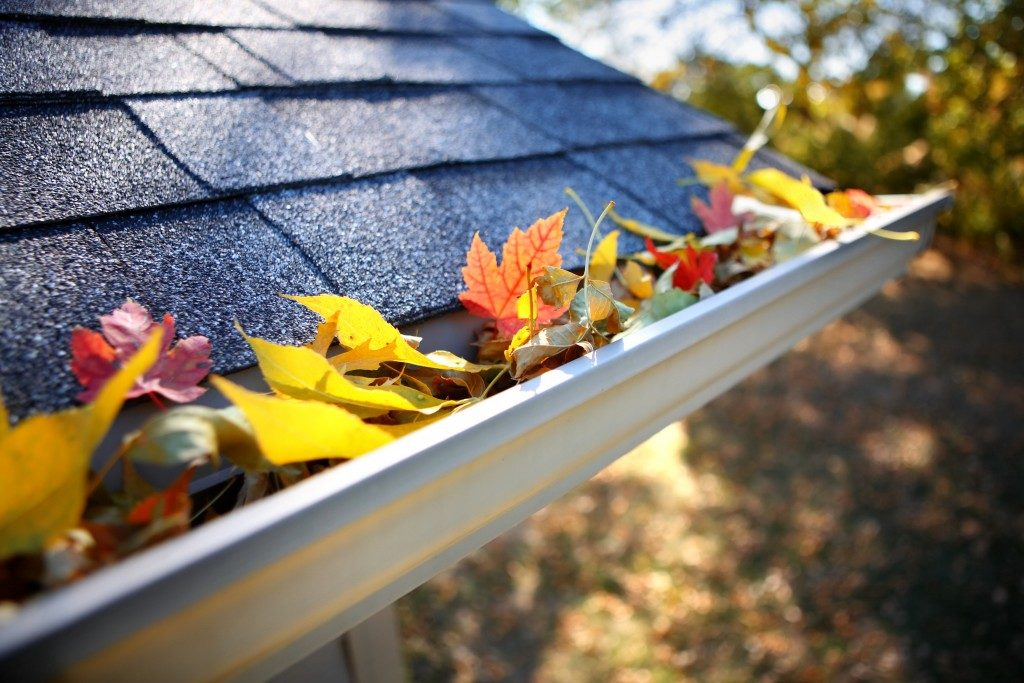 Rain gutter with leaves