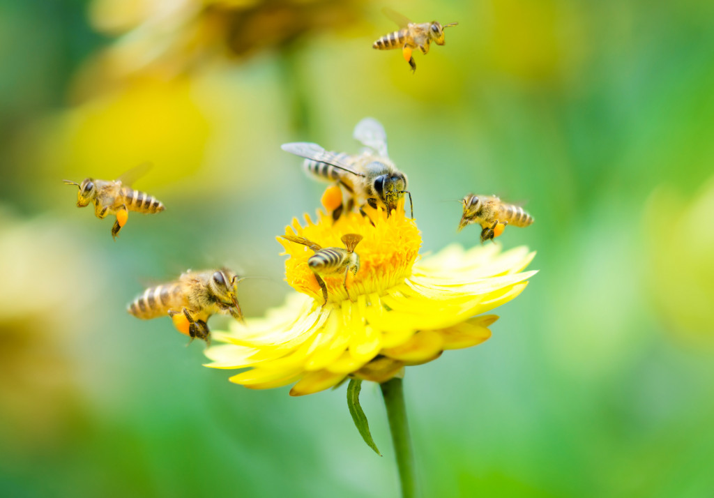 bees flying around a flower